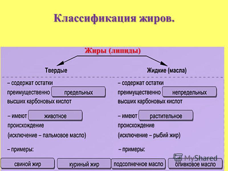 Классификация жиров. Жиры (липиды) Жиры (липиды)