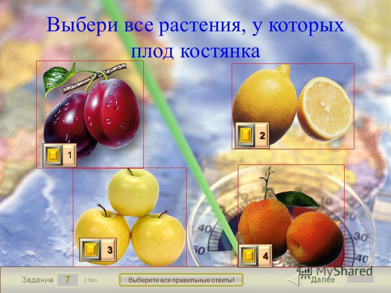 7 Задание Выберите все правильные ответы! Выбери все растения, у которых плод костянка Далее 2 бал. 1111 0 2222 0 3333 0 4444 0
