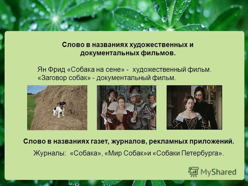 Слово в названиях художественных и документальных фильмов. Ян Фрид «Собака на сене» - художественный фильм. «Заговор собак» - документальный фильм. Слово в названиях газет, журналов, рекламных приложений. Журналы: «Собака», «Мир Собак»и «Собаки Петер