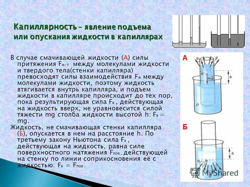 В случае смачивающей жидкости (А) силы притяжения F ж-т между молекулами жидкости и твердого тела(стенки капилляра) превосходят силы взаимодействия F ж между молекулами жидкости, поэтому жидкость втягивается внутрь капилляра, и подъем жидкости в капи
