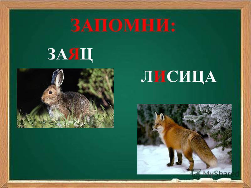ЗАЯЦ ЛИСИЦА