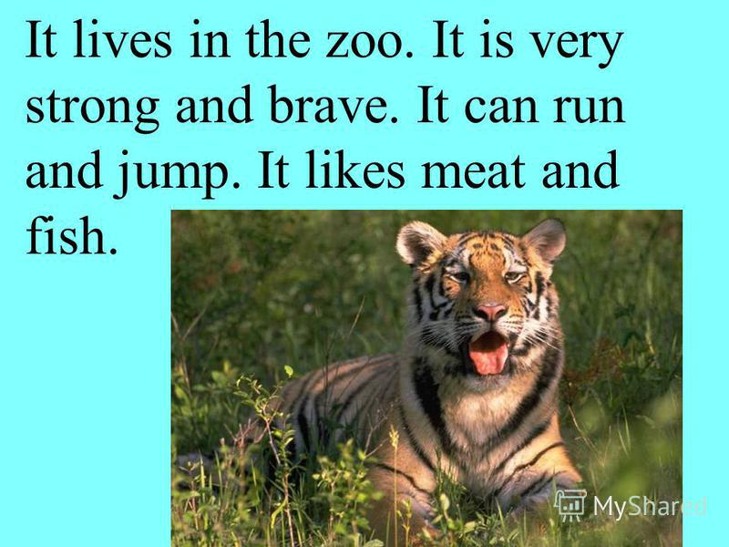 It lives in the zoo. It is very strong and brave. It can run and jump. It likes meat and fish.