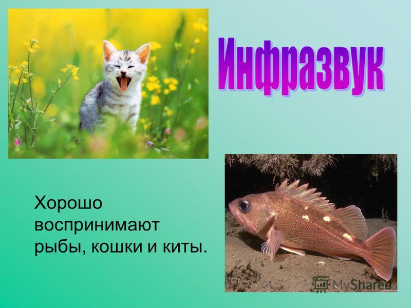 Хорошо воспринимают рыбы, кошки и киты.