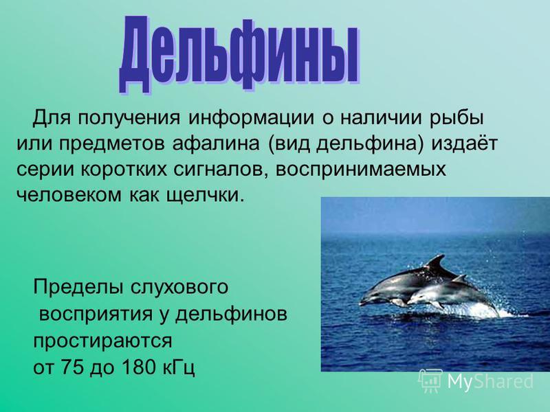 Для получения информации о наличии рыбы или предметов афалина (вид дельфина) издаёт серии коротких сигналов, воспринимаемых человеком как щелчки. Пределы слухового восприятия у дельфинов простираются от 75 до 180 к Гц