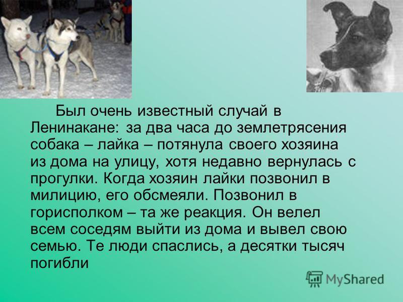 Был очень известный случай в Ленинакане: за два часа до землетрясения собака – лайка – потянула своего хозяина из дома на улицу, хотя недавно вернулась с прогулки. Когда хозяин лайки позвонил в милицию, его обсмеяли. Позвонил в горисполком – та же ре