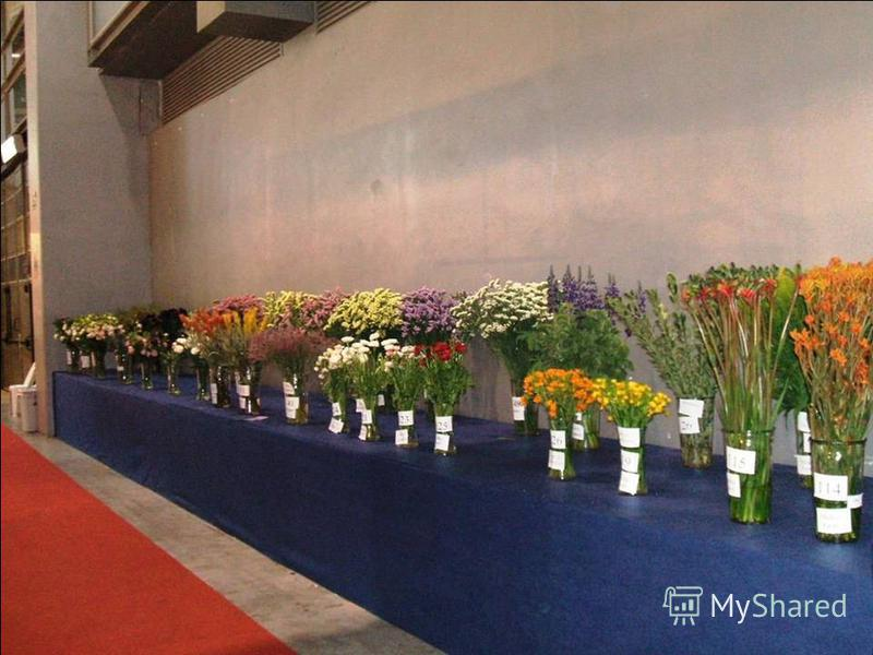 По периметру зала цветы, выращиваемые на экспорт