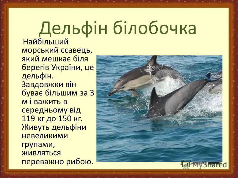 Дельфін білобочка Найбільший морський ссавець, який мешкає біля берегів України, це дельфін. Завдовжки він буває більшим за 3 м і важить в середньому від 119 кг до 150 кг. Живуть дельфіни невеликими групами, живляться переважно рибою.