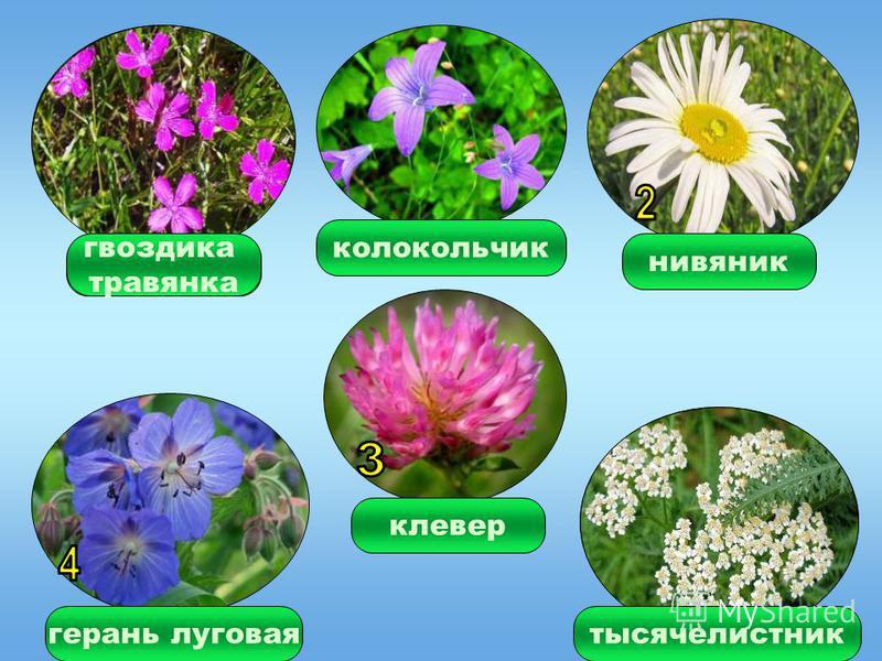 ЛУГ травы цветы растения животные