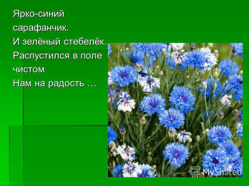 Ярко-синий сарафанчик. И зелёный стебелёк. Распустился в поле чистом Нам на радость … Нам на радость …