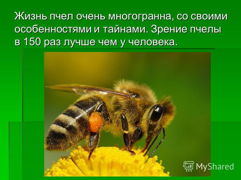 Жизнь пчел очень многогранна, со своими особенностями и тайнами. Зрение пчелы в 150 раз лучше чем у человека.