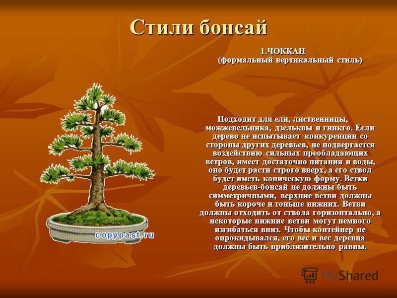 Стили бонсай 1. ЧОККАН (формальный вертикальный стиль) Подходит для ели, лиственницы, можжевельника, дзельквы и гинкго. Если дерево не испытывает конкуренции со стороны других деревьев, не подвергается воздействию сильных преобладающих ветров, имеет