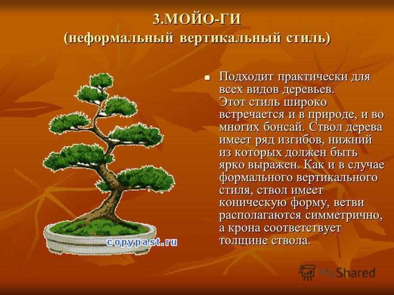 3.МОЙО-ГИ (неформальный вертикальный стиль) Подходит практически для всех видов деревьев. Этот стиль широко встречается и в природе, и во многих бонсай. Ствол дерева имеет ряд изгибов, нижний из которых должен быть ярко выражен. Как и в случае формал