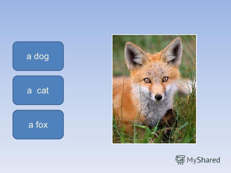 a fox a dog a cat