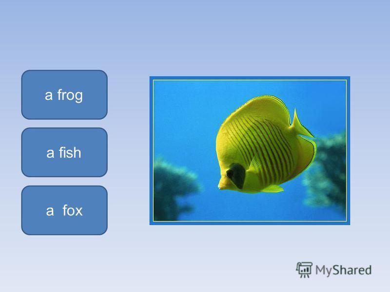 a fish a frog a fox