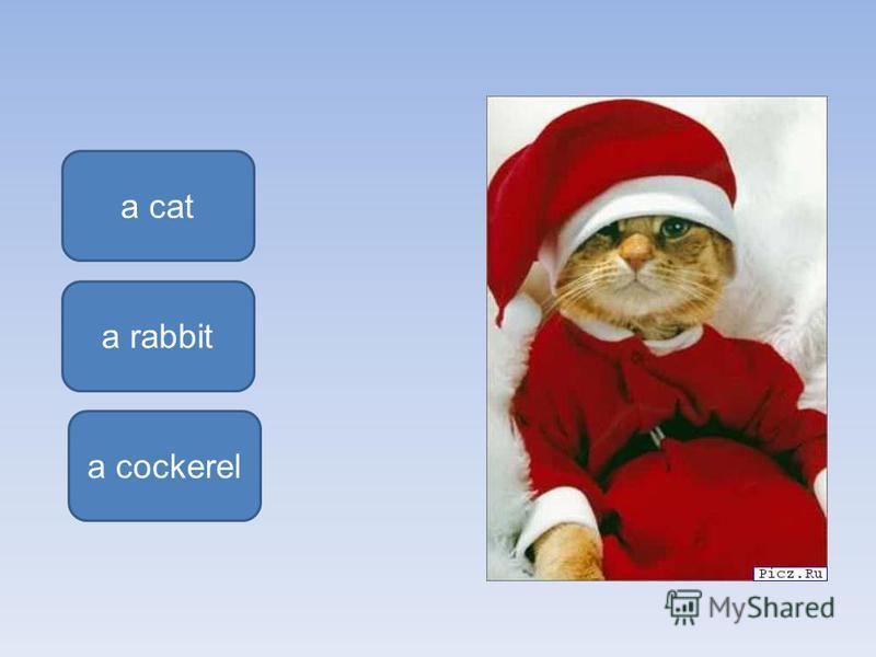 a cat a rabbit a cockerel