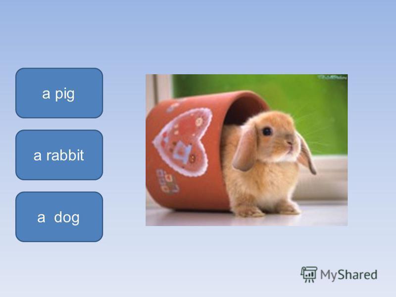 a rabbit a pig a dog