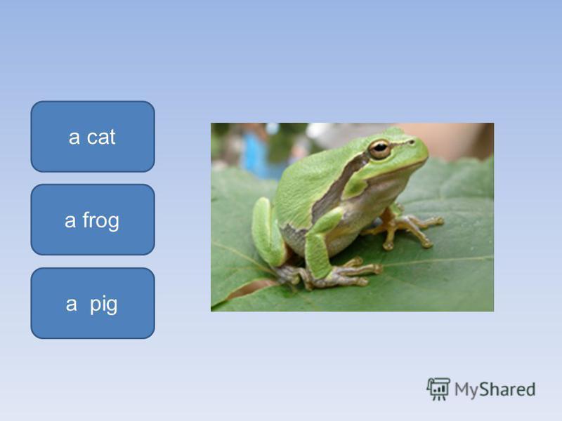 a frog a cat a pig