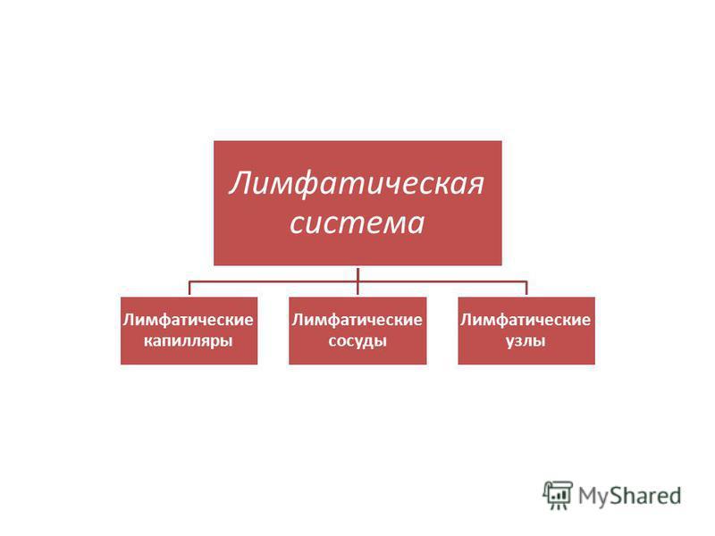 Лимфатическая система Лимфатические капилляры Лимфатические сосуды Лимфатические узлы