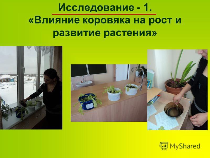 Исследование - 1. «Влияние коровяка на рост и развитие растения»