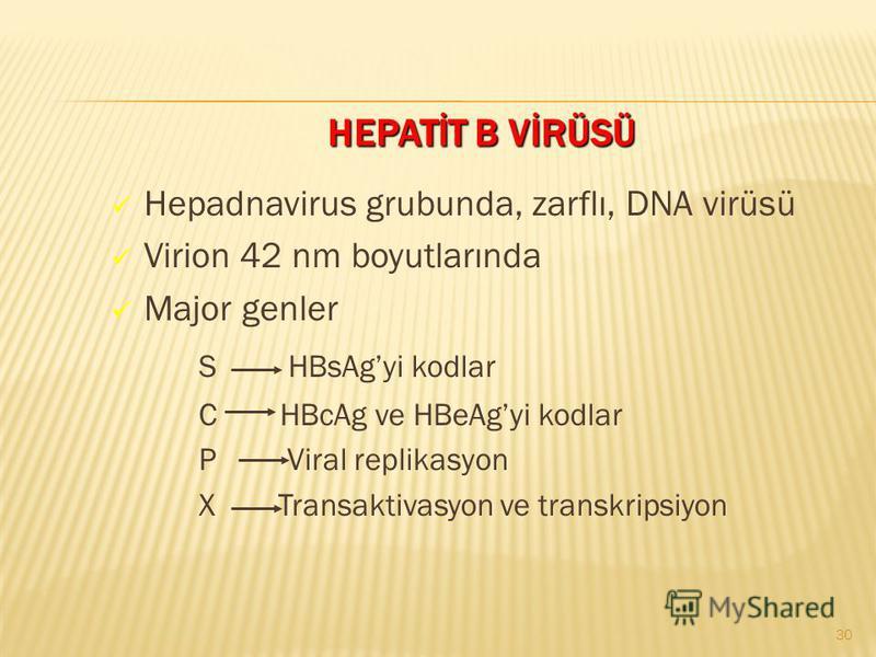 HEPATİT B VİRÜSÜ Hepadnavirus grubunda, zarflı, DNA virüsü Virion 42 nm boyutlarında Major genler S HBsAgyi kodlar C HBcAg ve HBeAgyi kodlar P Viral replikasyon X Transaktivasyon ve transkripsiyon 30