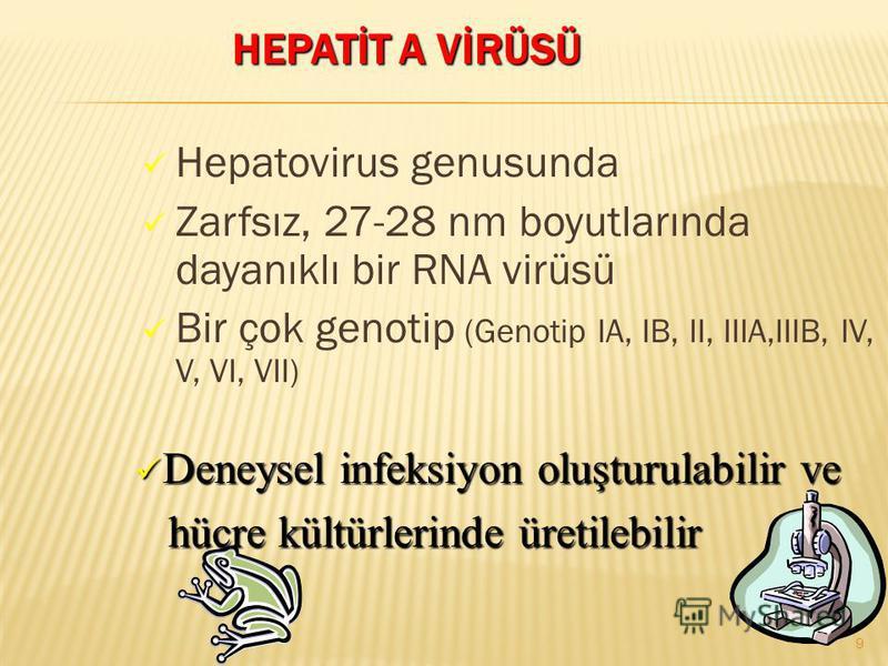 Hepatovirus genusunda Zarfsız, 27-28 nm boyutlarında dayanıklı bir RNA virüsü Bir çok genotip (Genotip IA, IB, II, IIIA,IIIB, IV, V, VI, VII) Deneysel infeksiyon oluşturulabilir ve Deneysel infeksiyon oluşturulabilir ve hücre kültürlerinde üretilebil