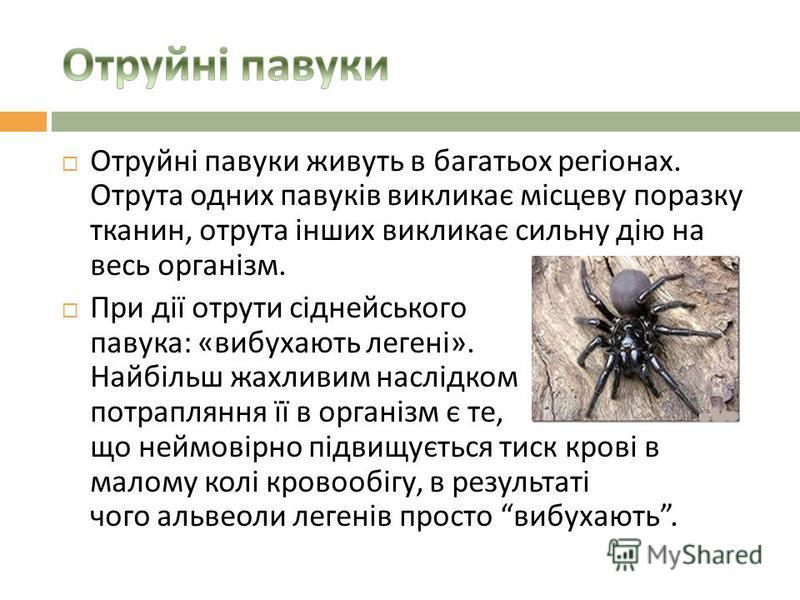 Отруйні павуки живуть в багатьох регіонах. Отрута одних павуків викликає місцеву поразку тканин, отрута інших викликає сильну дію на весь організм. При дії отрути сіднейського павука : « вибухають легені ». Найбільш жахливим наслідком потрапляння її