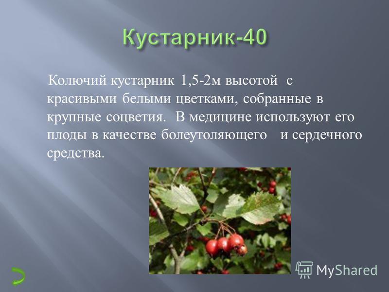 Вечно-зеленый кустарник смешанных лесов. Очень низкий ( 10-15 см),с кожистыми твердыми листьями. Его съедобные красные шаровидной формы ягоды богаты витамином С. На зиму с древних времен эту ягоду вымачивают, но своих полезных свойств она не теряет.