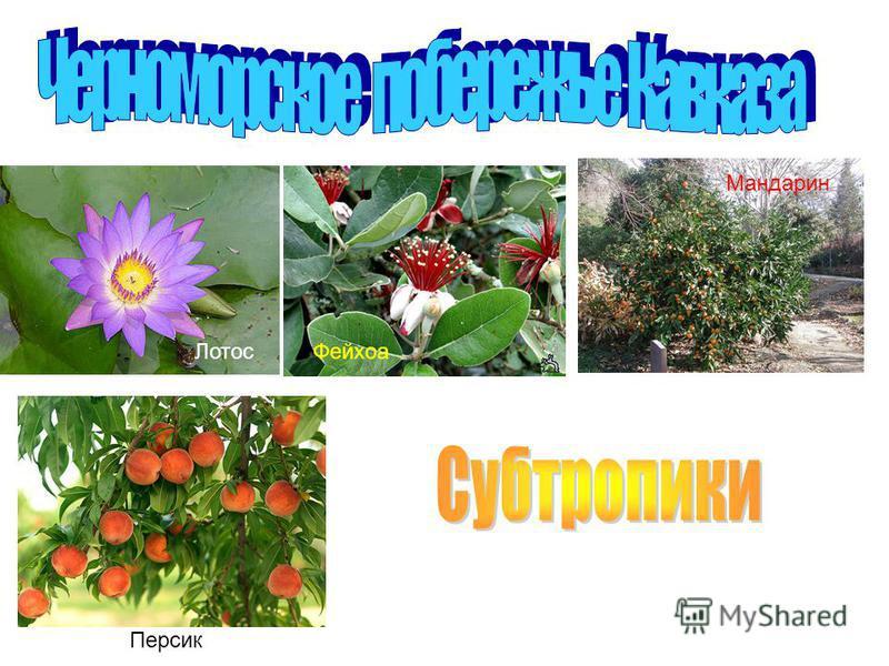 Лотос Фейхоа Мандарин Персик