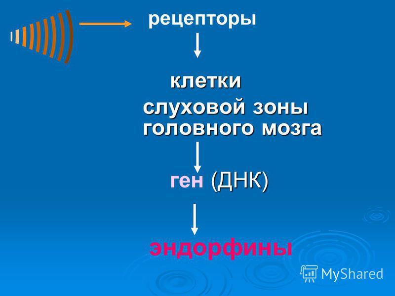 рецепторы клетки слуховой зоны головного мозга слуховой зоны головного мозга (ДНК) ген (ДНК) эндорфины