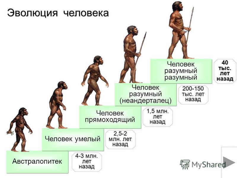 Австралопитек Человек умелый Человек прямоходящий Человек разумный (неандерталец) Эволюция человека 4-3 млн. лет назад 2,5-2 млн. лет назад 1,5 млн. лет назад 200-150 тыс. лет назад 40 тыс. лет назад Человек разумный