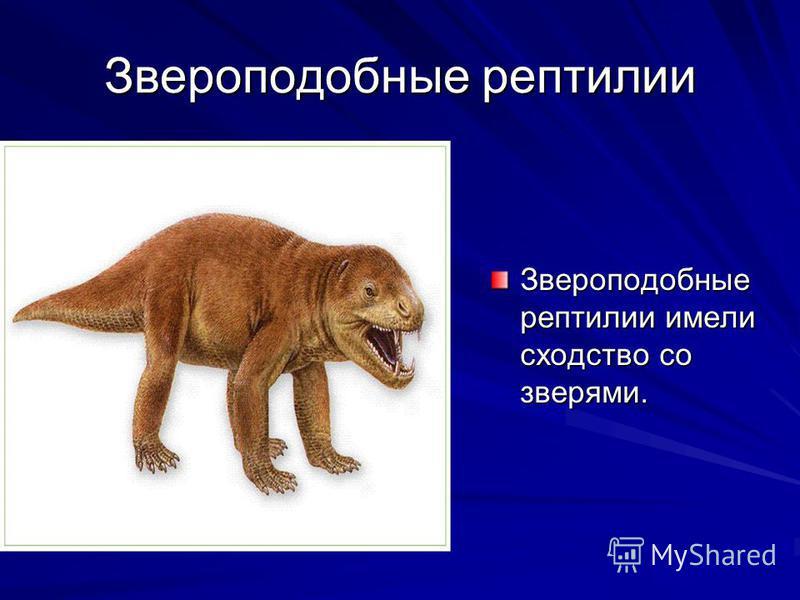 Звероподобные рептилии Звероподобные рептилии имели сходство со зверями.