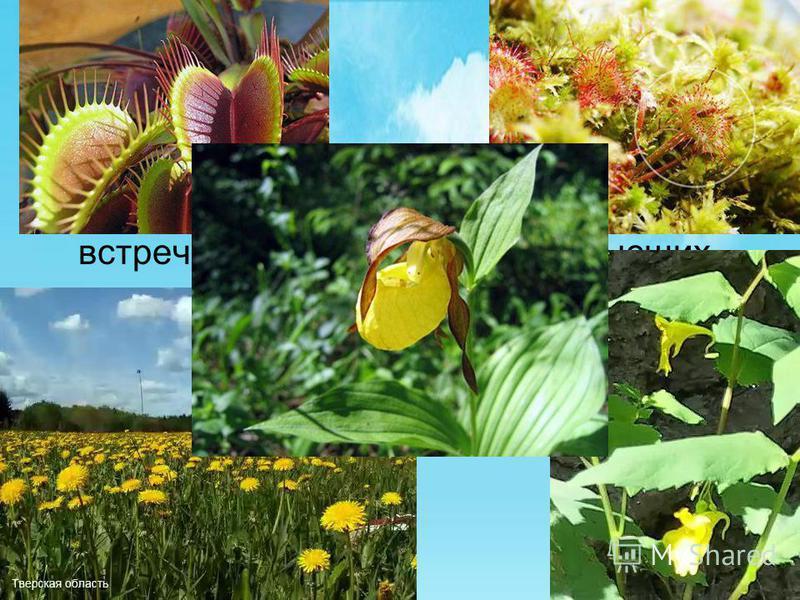 На территории заповедника зарегистрировано 240 видов птиц, встречаются около 546 видов высших растений, насчитывается 55 видов млекопитающих, 5 видов рептилий, а также 6 видов земноводных.