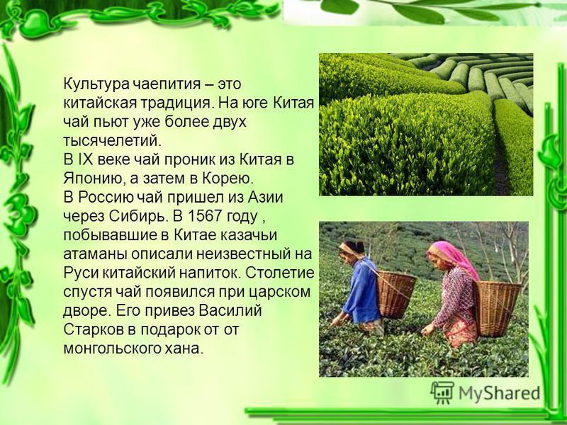 Культура чаепития – это китайская традиция. На юге Китая чай пьют уже более двух тысячелетий. В IX веке чай проник из Китая в Японию, а затем в Корею. В Россию чай пришел из Азии через Сибирь. В 1567 году, побывавшие в Китае казачьи атаманы описали н