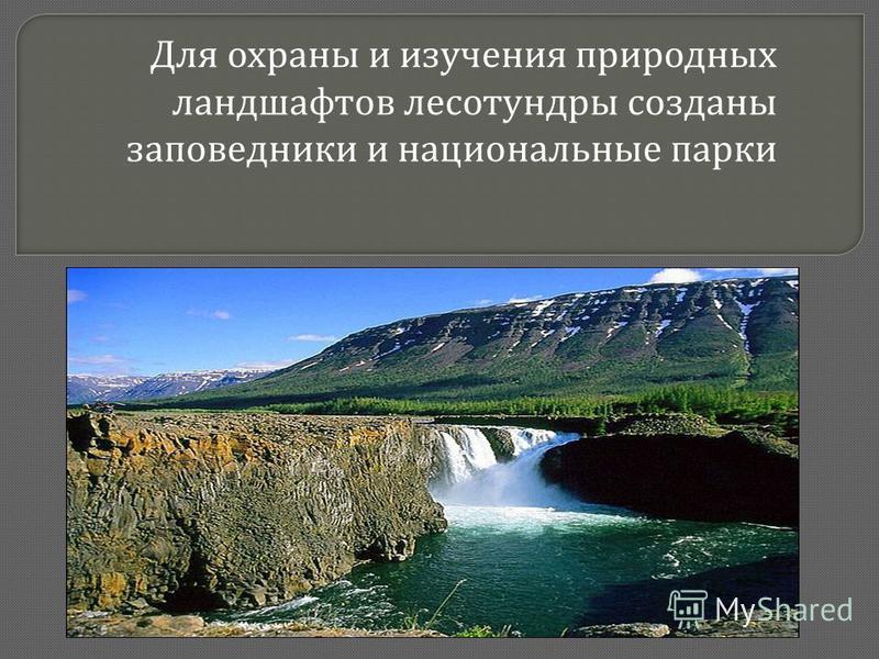 Для охраны и изучения природных ландшафтов лесотундры созданы заповедники и национальные парки