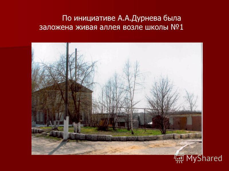 По инициативе А.А.Дурнева была заложена живая аллея возле школы 1