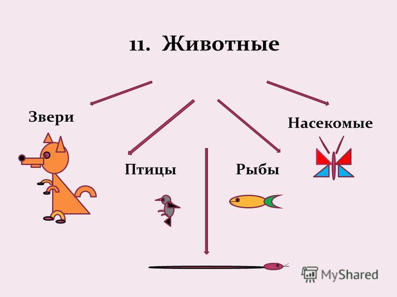 11. Животные Звери Птицы Рыбы Насекомые
