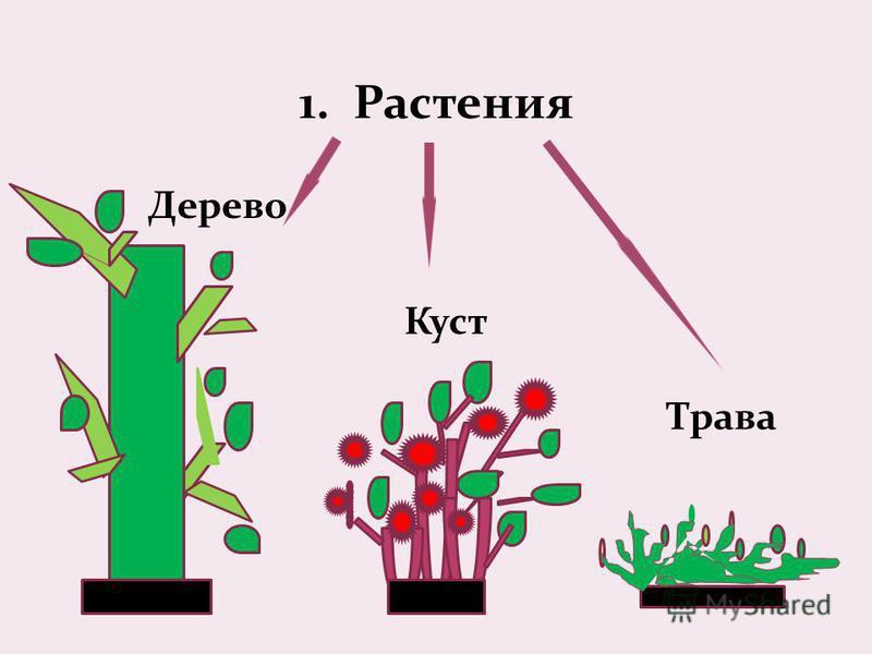 1. Растения Дерево Куст Трава
