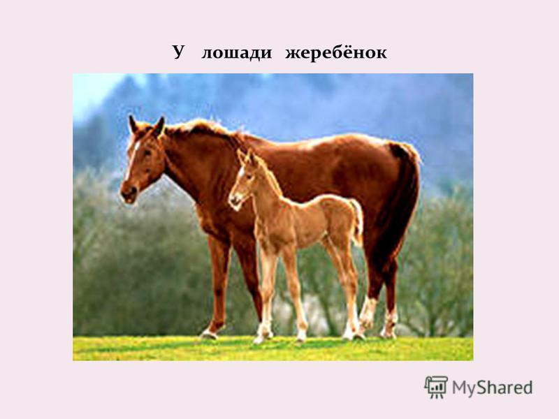 У лошади жеребёнок