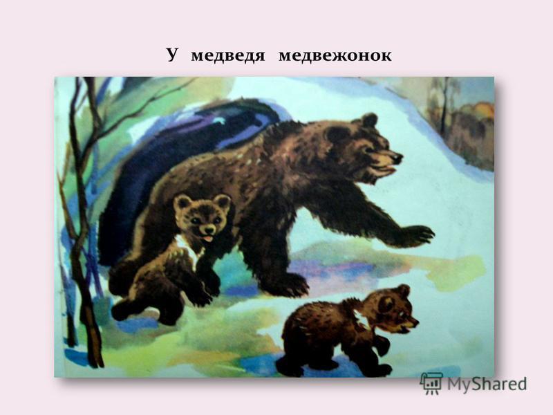 У медведя медвежонок
