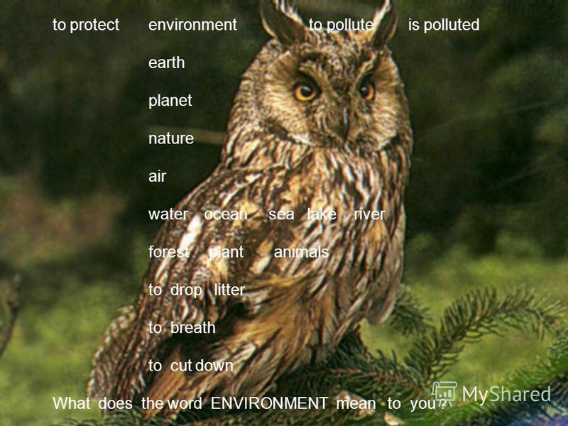 to protect environment to pollute is polluted earth planet nature air water ocean sea lake river forest plant animals to drop litter to breath to cut down What does the word ENVIRONMENT mean to you ?