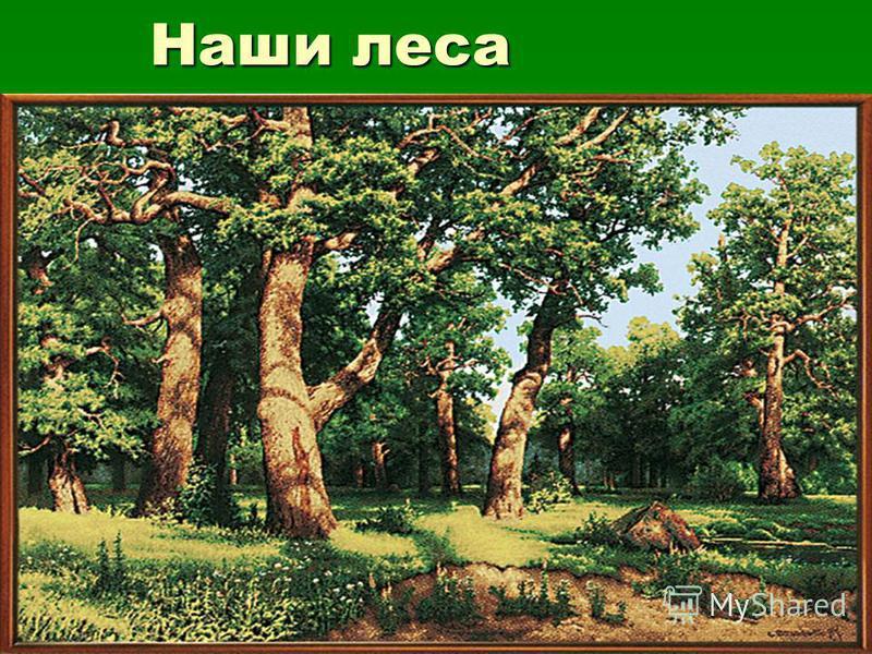 Наши леса Наши леса