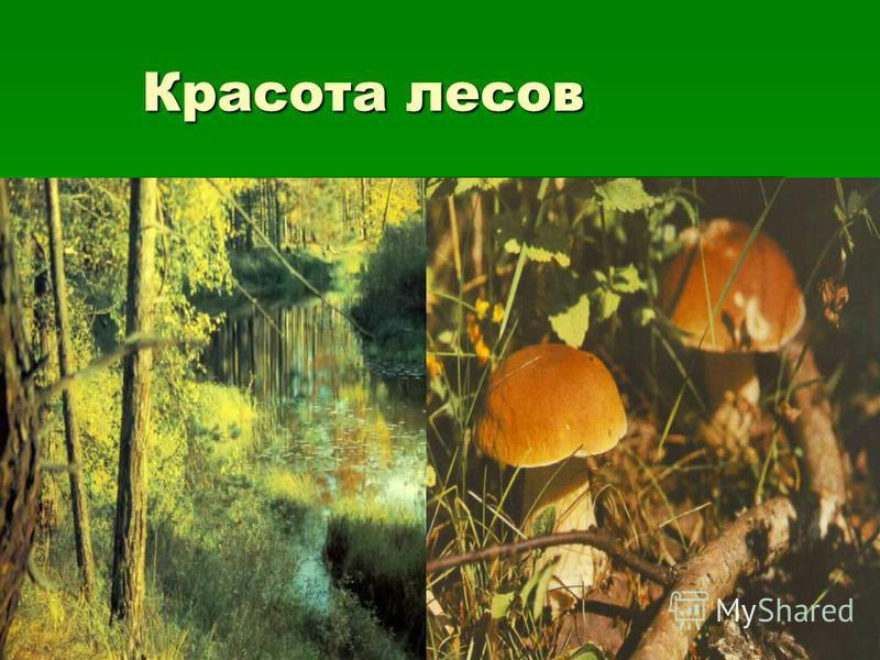 Красота лесов Красота лесов