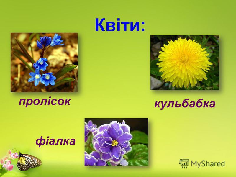 Квіти: фіалка кульбабка пролісок
