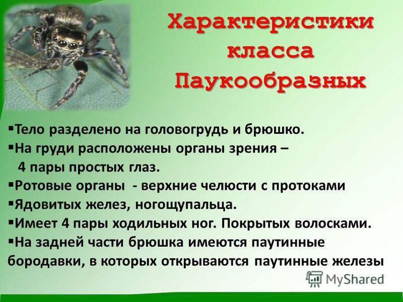 Характеристики класса Паукообразных Тело разделено на головогрудь и брюшко. На груди расположены органы зрения – 4 пары простых глаз. Ротовые органы - верхние челюсти с протоками Ядовитых желез, ногощупальца. Имеет 4 пары ходильных ног. Покрытых воло