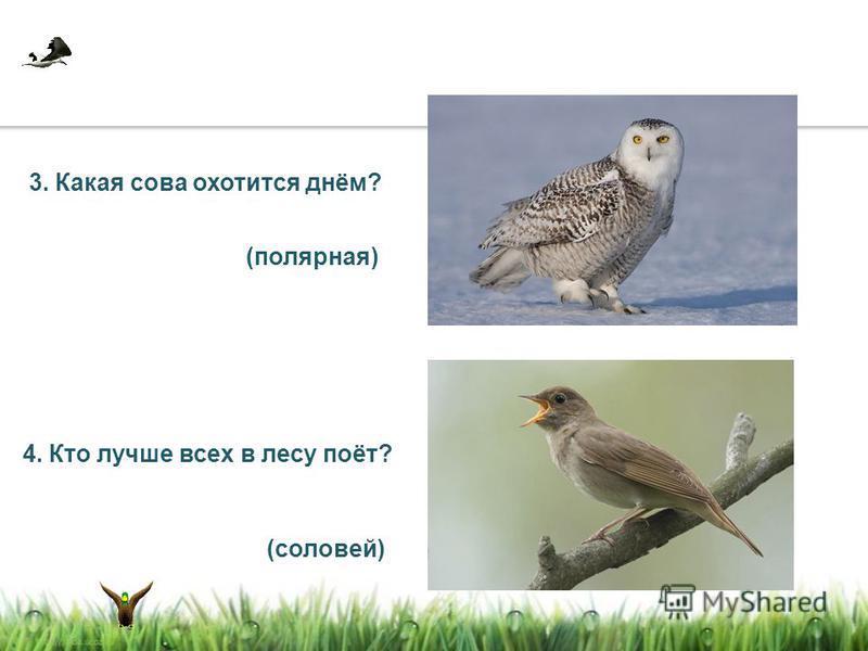 3. Какая сова охотится днём? 4. Кто лучше всех в лесу поёт? (полярная) (соловей)