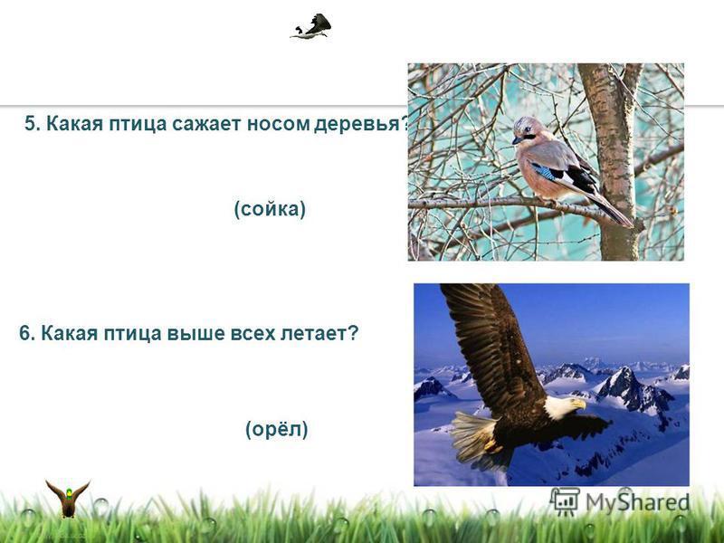 5. Какая птица сажает носом деревья? 6. Какая птица выше всех летает? (сойка) (орёл)