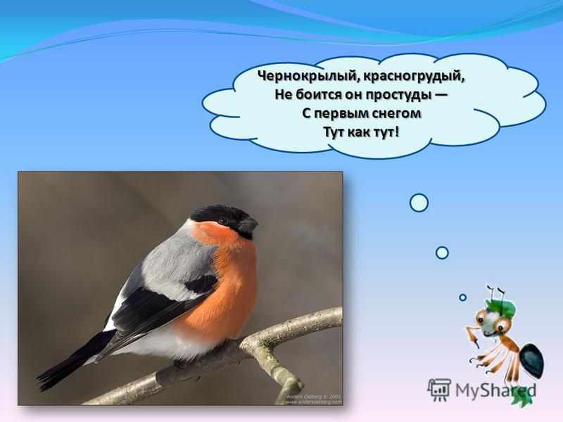 Чернокрылый, красногрудый, Не боится он простуды С первым снегом Тут как тут!