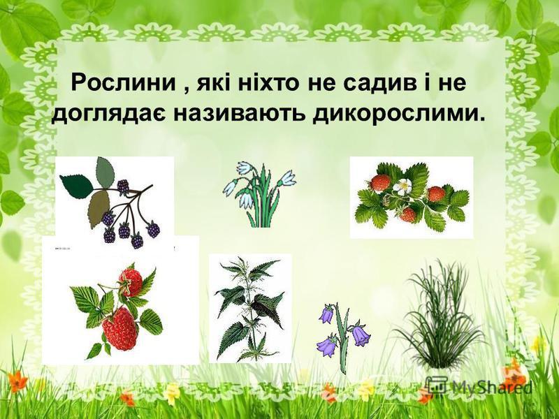 Рослини, які ніхто не садив і не доглядає називають дикорослими.