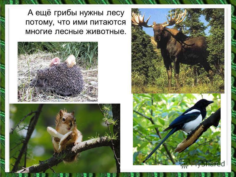 А ещё грибы нужны лесу потому, что ими питаются многие лесные животные.