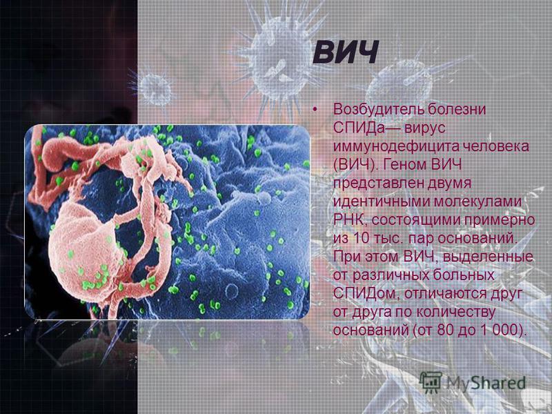 Возбудитель болезни СПИДа вирус иммунодефицита человека (ВИЧ). Геном ВИЧ представлен двумя идентичными молекулами РНК, состоящими примерно из 10 тыс. пар оснований. При этом ВИЧ, выделенные от различных больных СПИДом, отличаются друг от друга по кол